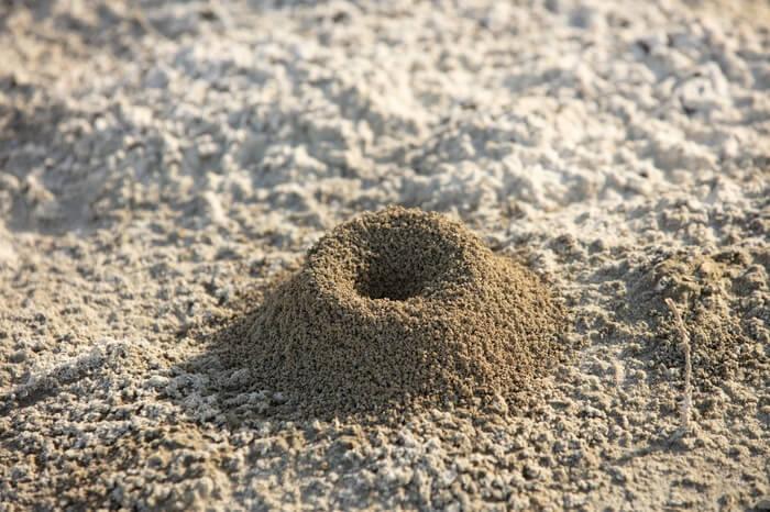 A small ant hill underneath a car