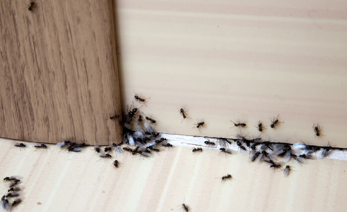 A group of ants climbing into a wall