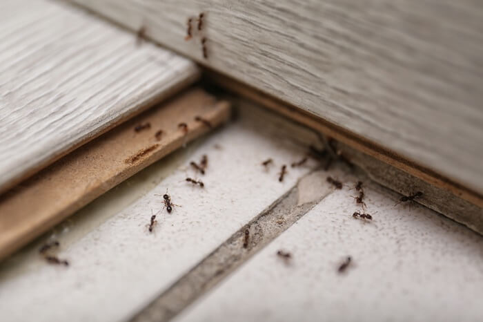 A large number of ants on a bedroom floor
