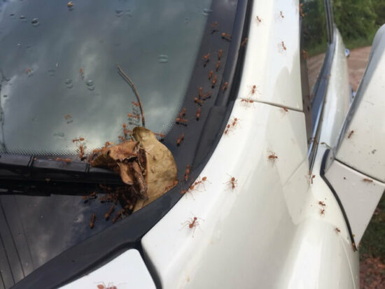 Ants crawling into a car