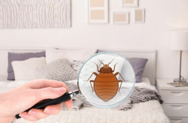 Looking for baby bed bugs with a magnifying glass