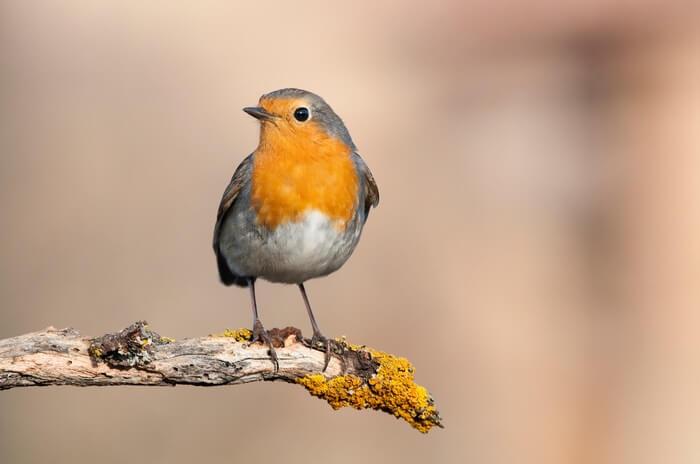 One bird in a tree in the garden