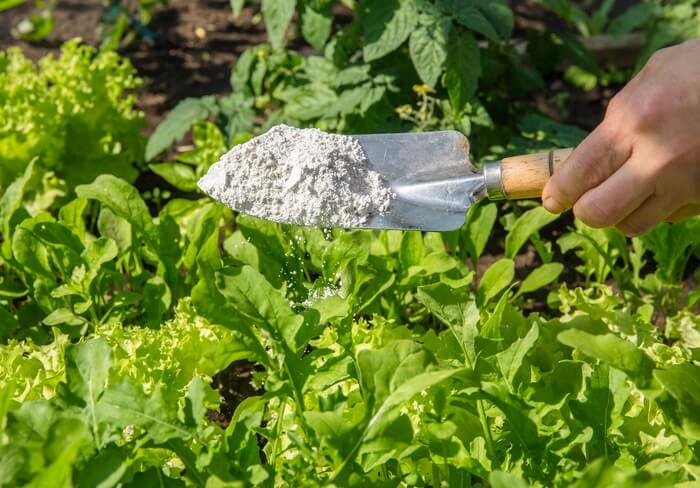 Eco-friendly diatomaceous earth being scooped