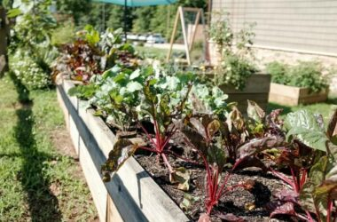 A garden after being treated with organic pest control methods