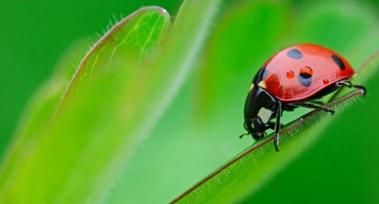 A small ladybug walking on a plant