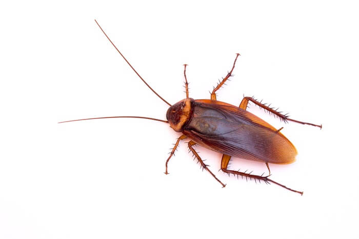 One found cockroach by itself