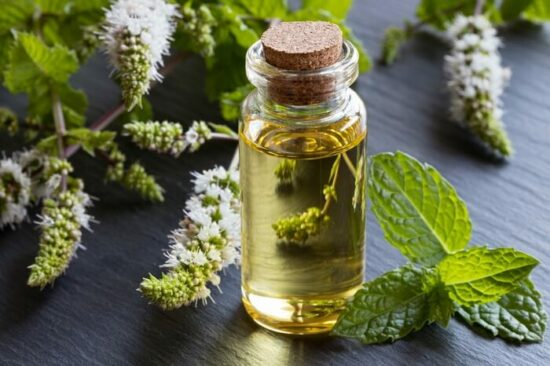 Peppermint oil before being used to repel spiders