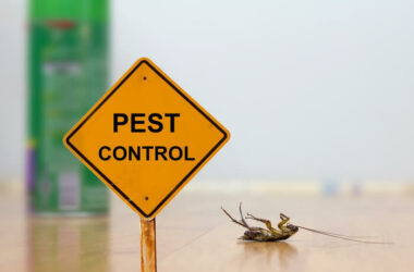 A pest insect next to a sign for pest control tips