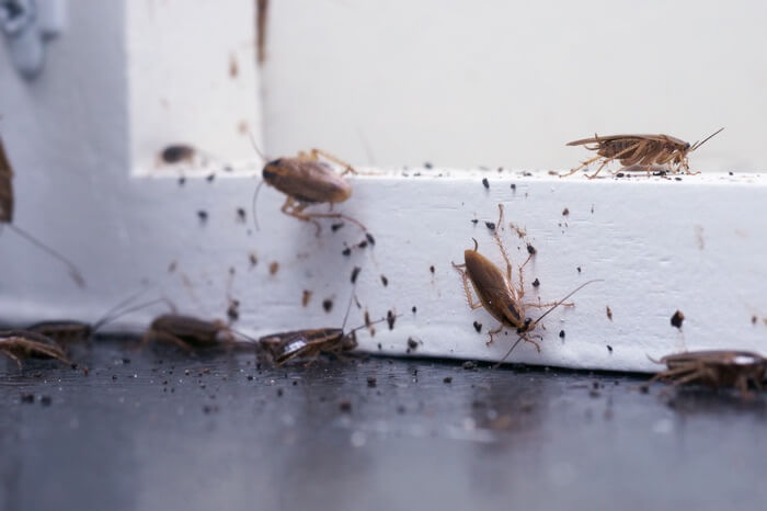 A roach infestation with numerous droppings