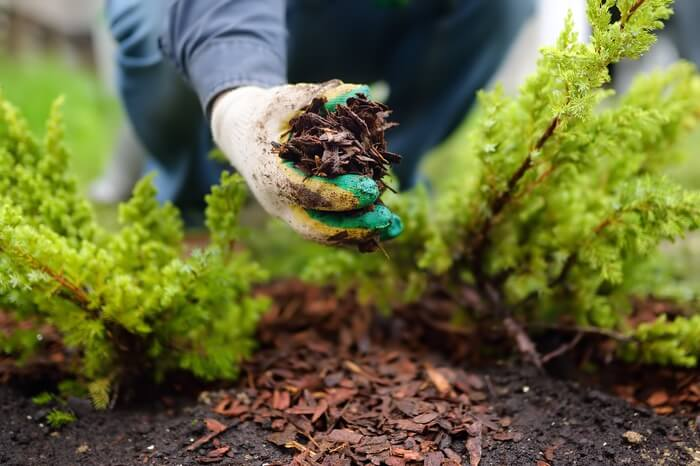 Woman using mulch for pest control