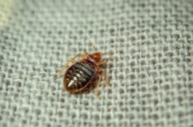 One of many bed bugs in electronics
