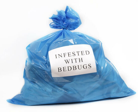 Bed bugs living on the inside of a plastic bag