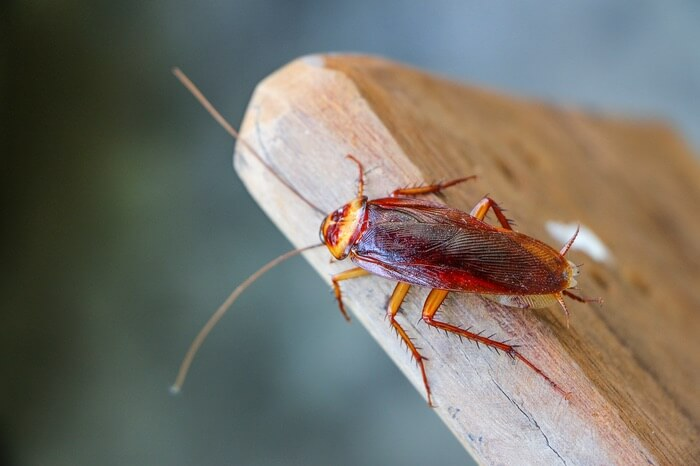 One cockroach on a chair