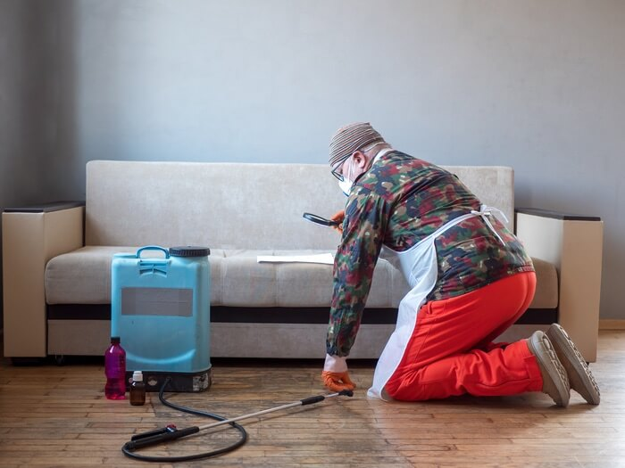 Man getting rid of bed bugs in a couch