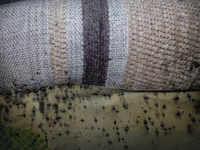 Signs of bed bugs inside a couch