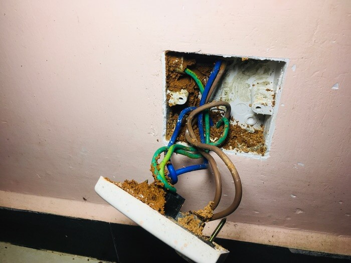 Ants coming out of an electrical outlet that has been removed from the wall