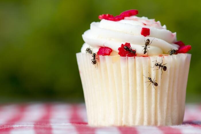 Ants spreading disease onto food
