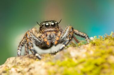 A jumping spider being kept out of the garage