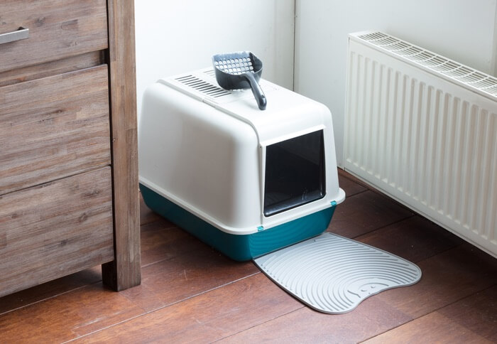 A litter box with gnats in it