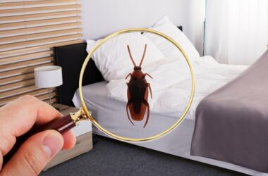 A homeowner looking to keep a cockroach away at night