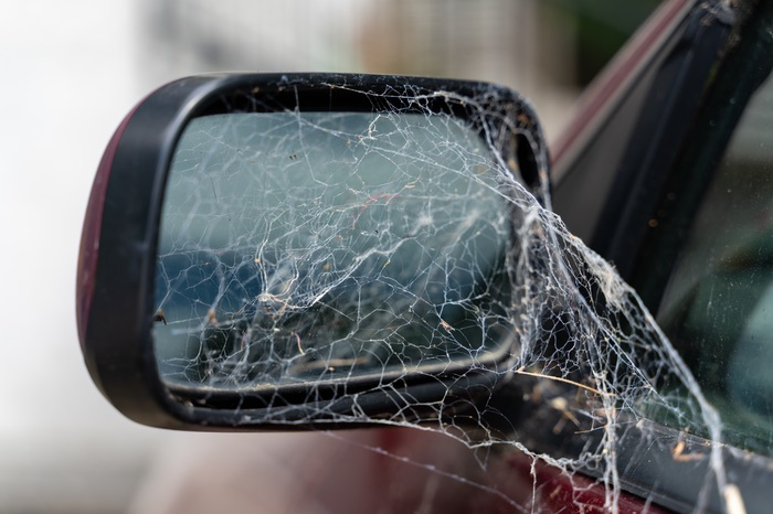 Spider with a web in a car mirror