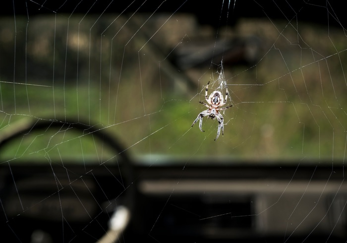 One spider inside a car