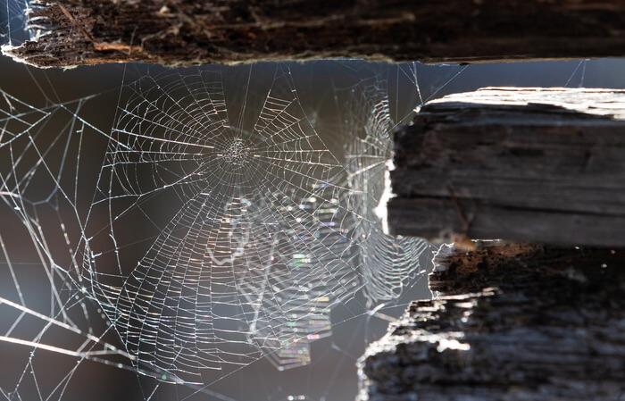 Multiple spider webs in a garage