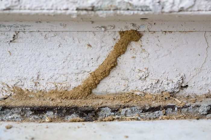 Termite mud tubes as the result of an infestation