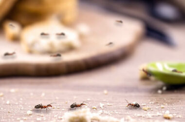 Ants crawling around in the kitchen