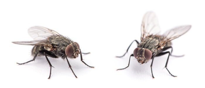 Flies being repelled by scents and smells