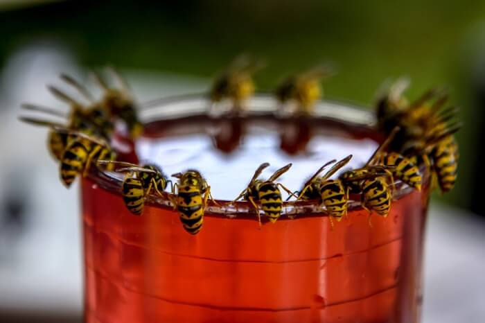 A group of wasps drinking water